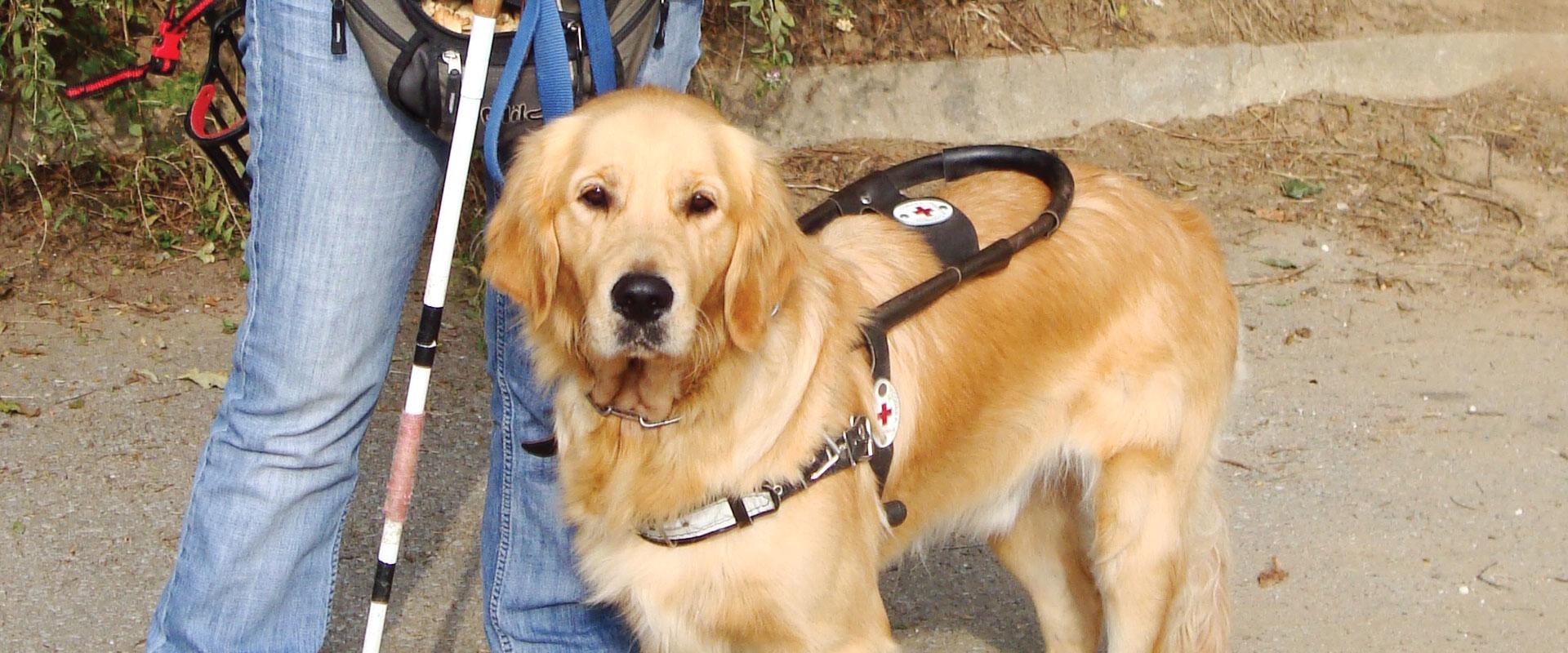 Permalink to: Обучение на служебни кучета