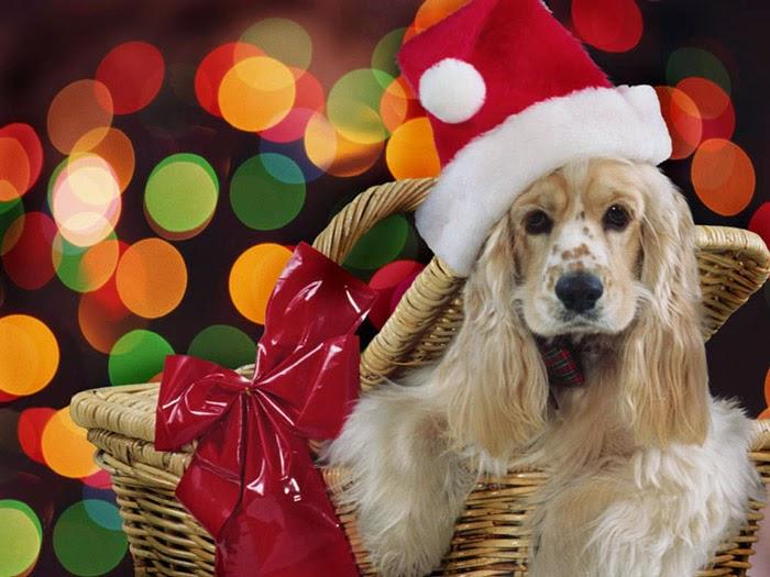 Дядо Коледа с шейната носи радост на децата…